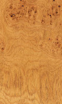 Oak European Pippy Veneer